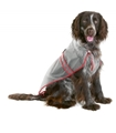 Dog-Rain Coat 46cm Svart